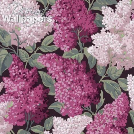 Lilac Grandiflora