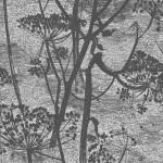 Cow Parsley - Grey Wallpaper